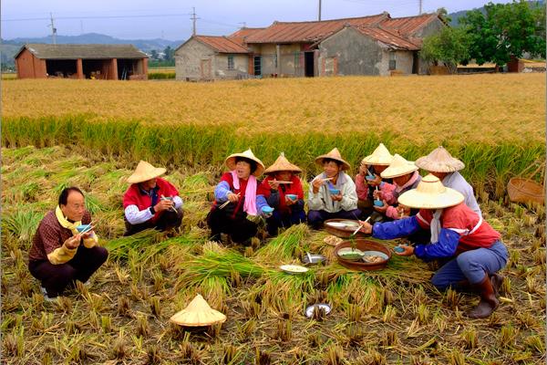 佳作-蔡世垚-吃割稻飯