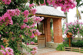 Lotus Lily House
