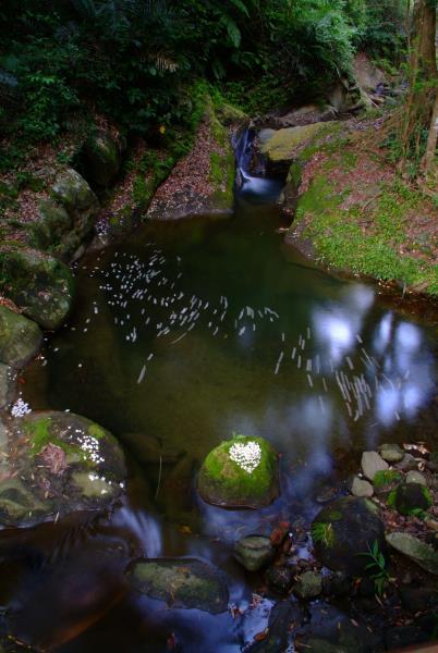 大窩生態園區 河流