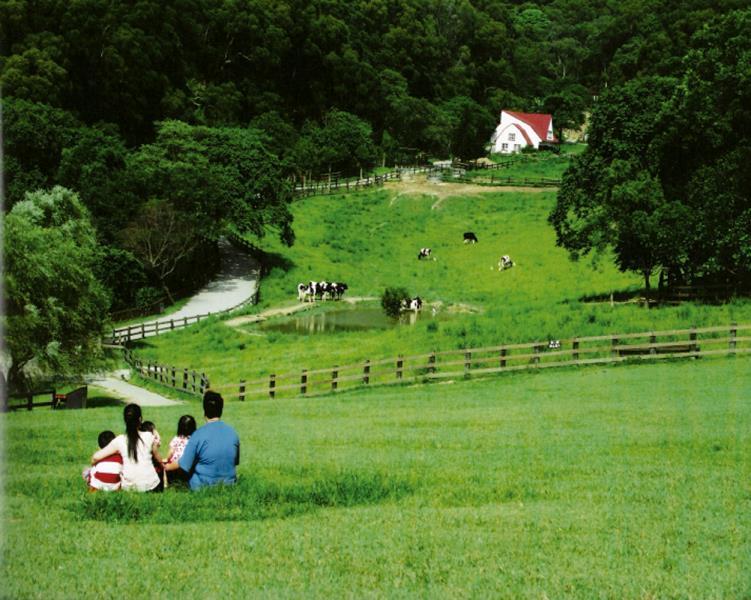 飛牛牧場 草原