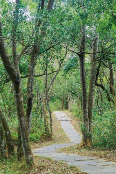 鄭漢步道 平整步道路面