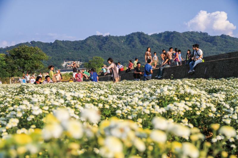 九湖村就是遠近馳名的「銅鑼杭菊」生產地