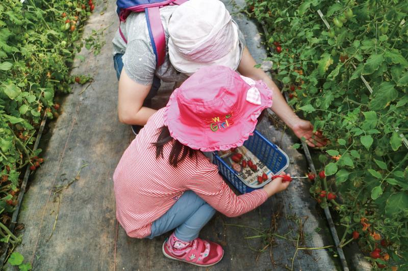 Parent-child fruit picking