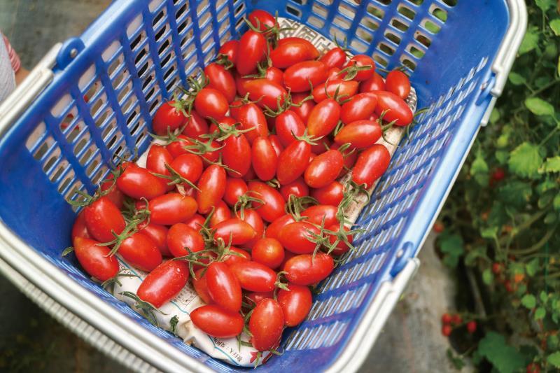 用天然發酵的肥料 來為果樹施肥