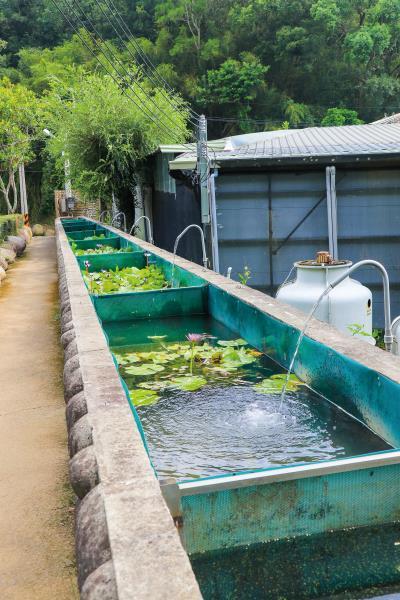 夏威夷紅芭樂觀光農園 水池