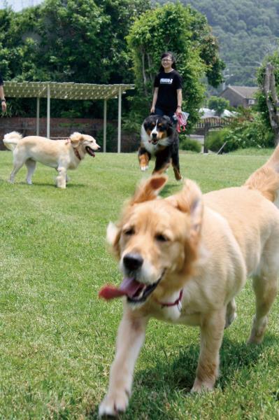 幸福農場 草原上的ˊ狗狗