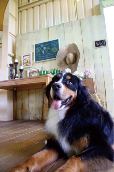 幸福農場 ˊ狗狗