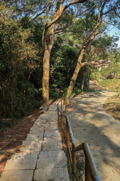 老銃櫃步道 老樹成林帶給步道充足的遮蔭效果