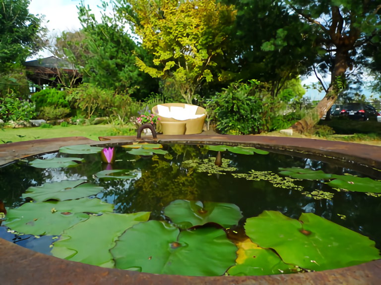 花自在食宿館 園區池塘