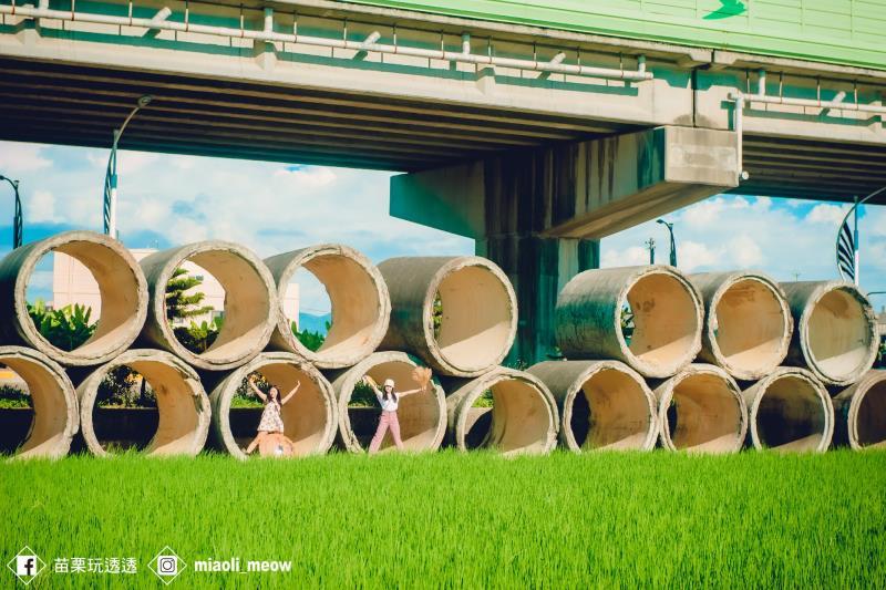 一望無際的綠色稻浪旁,放置兩層約22個水泥管