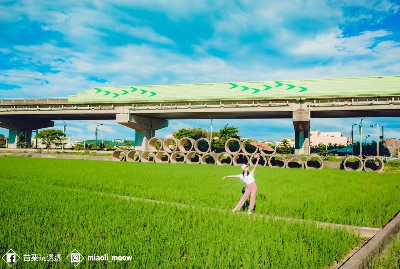 一望無際的綠色稻浪