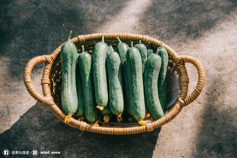 飽滿翠綠的小黃瓜結實累累。